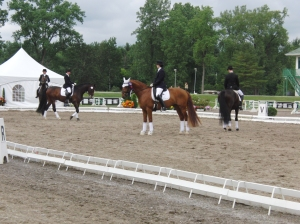 """Hey, will you guys stand still...let's get this ribbon nonsense over with and get back to the barn!!!"""