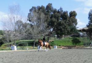 William's stretchy ride in the dressage court yesterday.