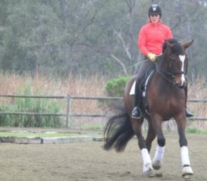 Lindsey's early morning, before flight home, lesson with Shannon, on Fred.