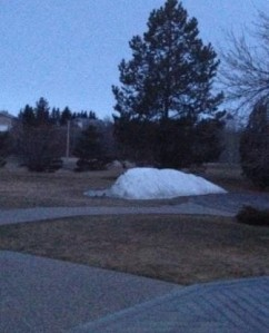 The snow pile at the end of the walk this morning.