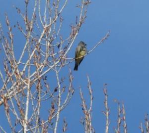 Bird watching in the sunshine.