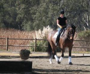 A walk in the sunshine with Lance before his lesson.