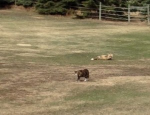 Yes...Tippy (the cat) and her best friend...our resident fox.  I guess we should name him...