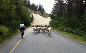 Grand Fondo Banff 1