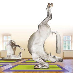 Horse Pilates 1