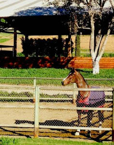 """This will be Fred in her turnout pen this weekend...""""Where's Lance!!!"""""""