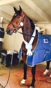 Lance won a pretty blue ribbon in the Grand Prix on Friday.