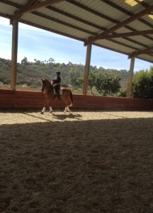 Merle and Gezz in the covered arena yesterday. Great job!